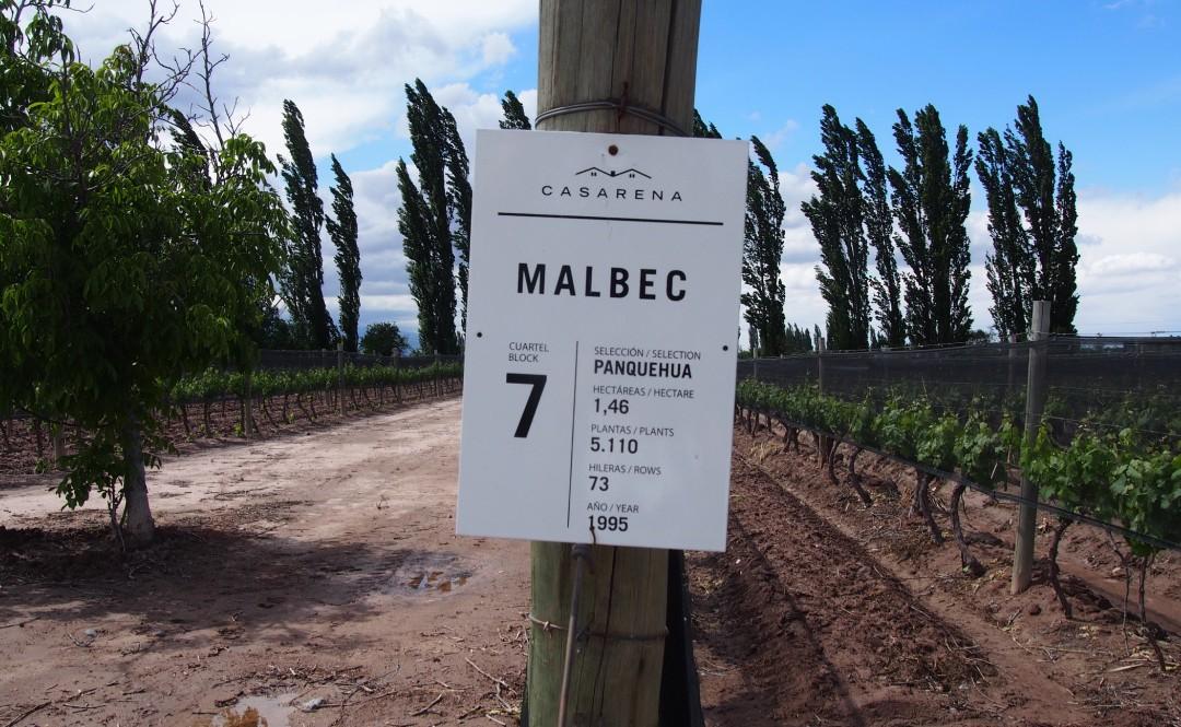 Wine & Dine In Mendoza