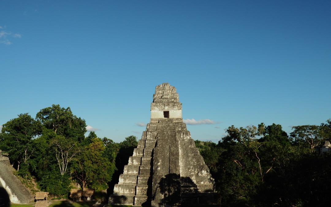 Flores en Tikal in Guatemala